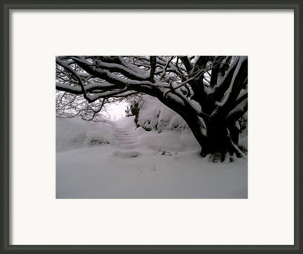 Snowy Path Framed Print By Amanda Moore