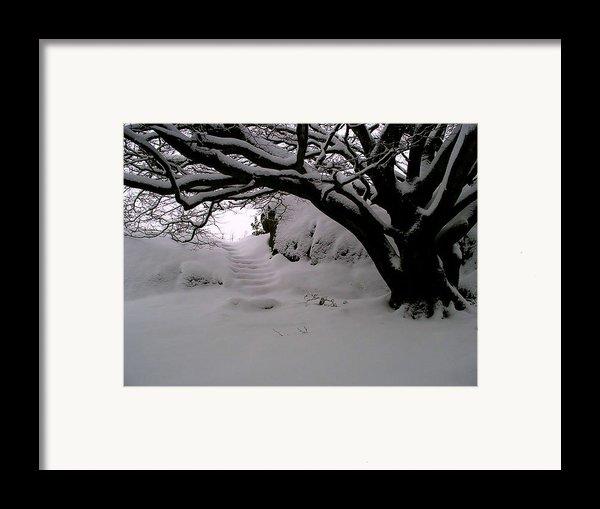 Snowy Path Framed Print By Amanda Moore
