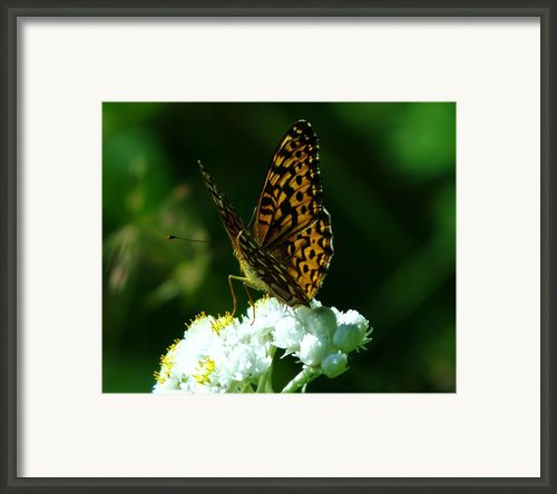Soaking In The Sun Framed Print By Jeff  Swan