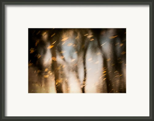 Soft Autumn Framed Print By Steven Milner