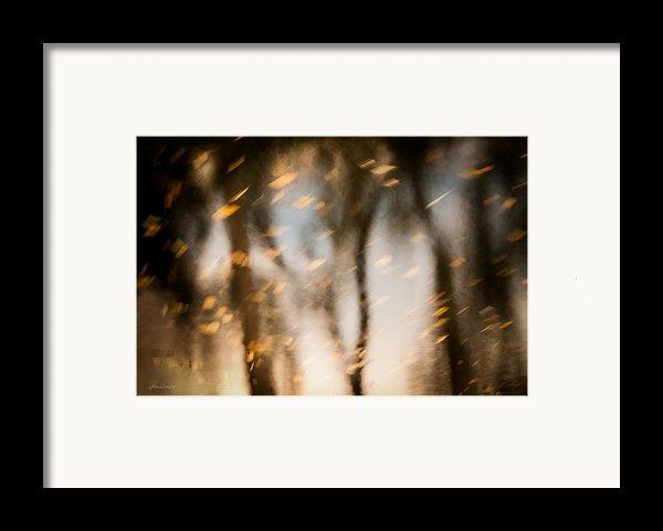 Soft Autumn Framed Print By Steven Milner