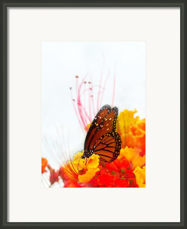 Soft Embrace Framed Print By Kume Bryant
