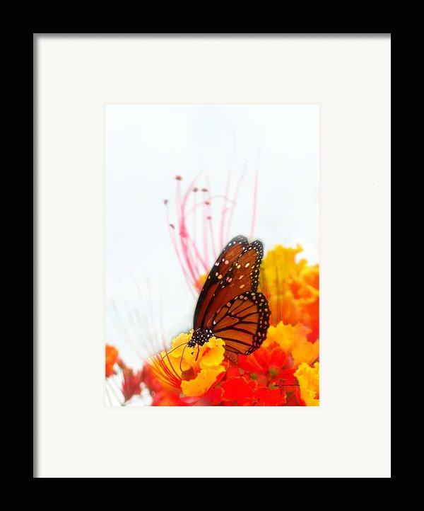 Soft Embrace Framed Print By Kume Bryant