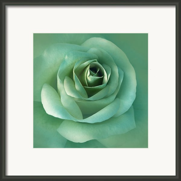 Soft Emerald Green Rose Flower Framed Print By Jennie Marie Schell