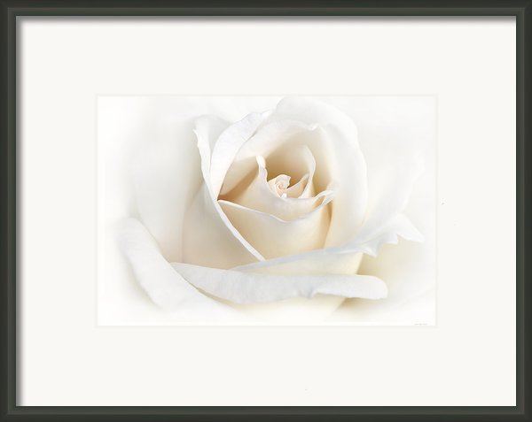 Soft Ivory Rose Flower Framed Print By Jennie Marie Schell