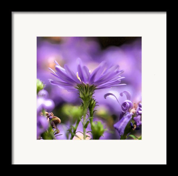 Soft Lilac Framed Print By Leif Sohlman
