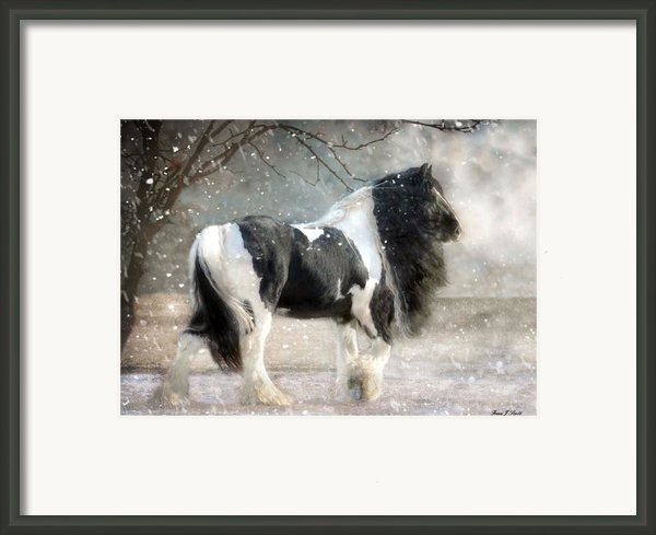 Solitary Framed Print By Fran J Scott