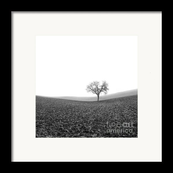 Solitary Tree In Winter. Auvergne. France Framed Print By Bernard Jaubert