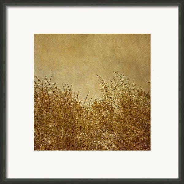 Solitude Framed Print By Kim Hojnacki