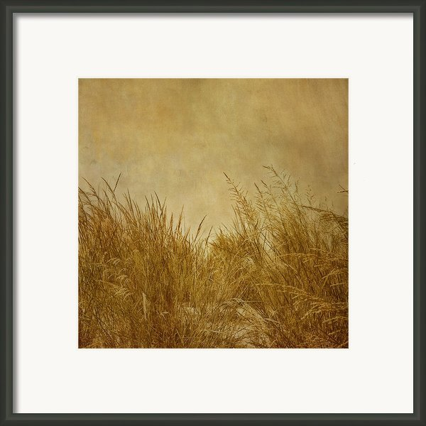 Solitude Framed Print By Kim Hojnacki