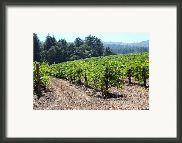 Sonoma Vineyards In The Sonoma California Wine Country 5d24512 Framed Print By Wingsdomain Art And Photography