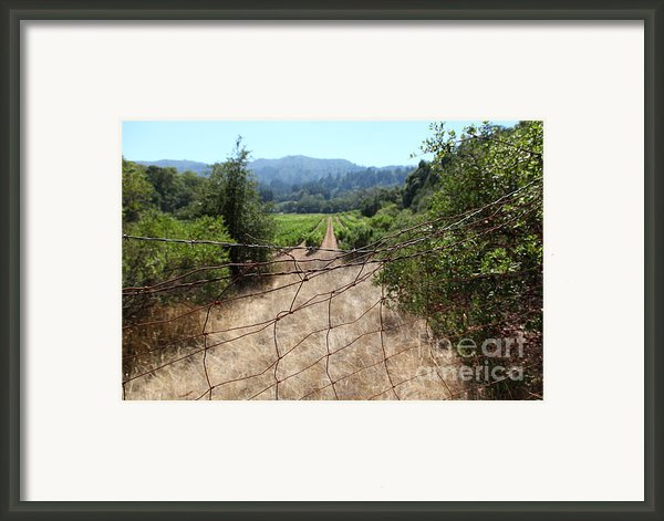 Sonoma Vineyards In The Sonoma California Wine Country 5d24520 Framed Print By Wingsdomain Art And Photography