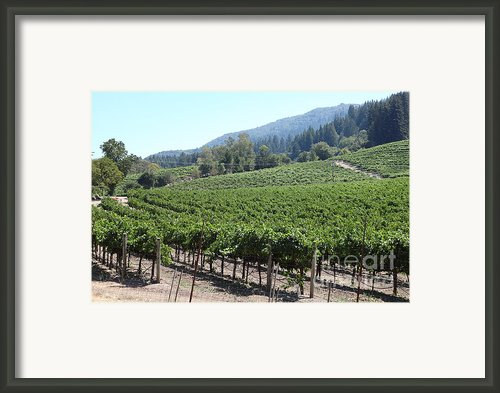 Sonoma Vineyards In The Sonoma California Wine Country 5d24541 Framed Print By Wingsdomain Art And Photography