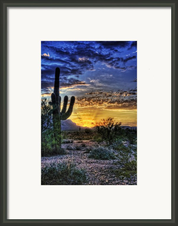 Sonoran Sunrise  Framed Print By Saija  Lehtonen