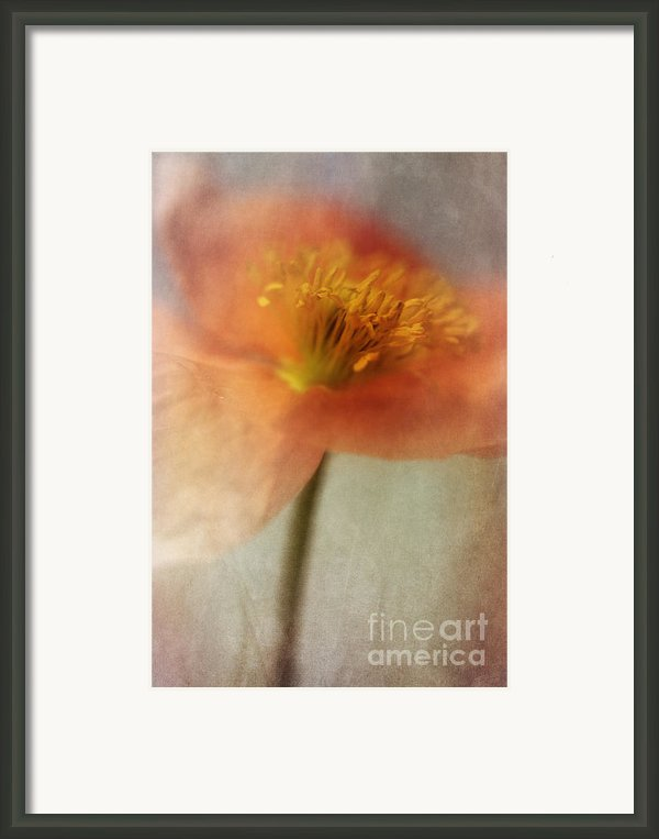 Soulful Poppy Framed Print By Priska Wettstein