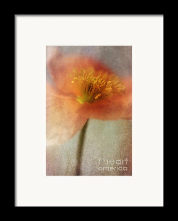 Soulful Poppy Framed Print By Priska Wettstein