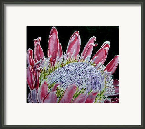 South African Flower Protea Painting Framed Print By Sylvie Heasman
