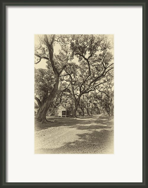 Southern Lane Sepia Framed Print By Steve Harrington
