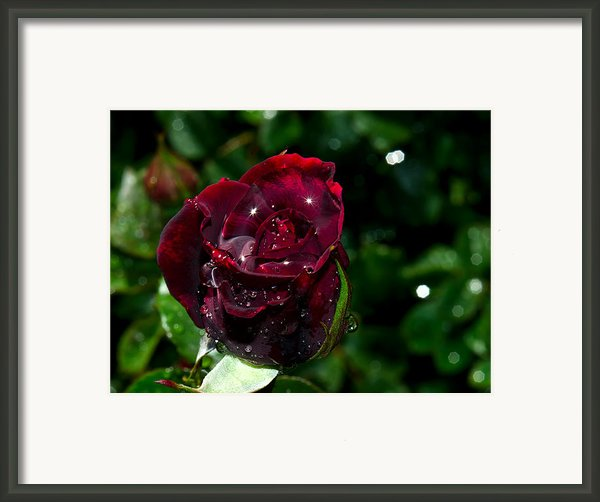 Sparkling Red Rose Framed Print By Camille Lopez