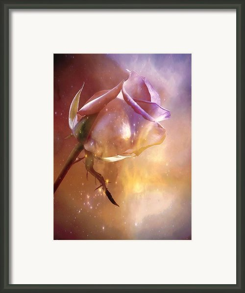 Sparkling Rose Framed Print By Anne Macdonald