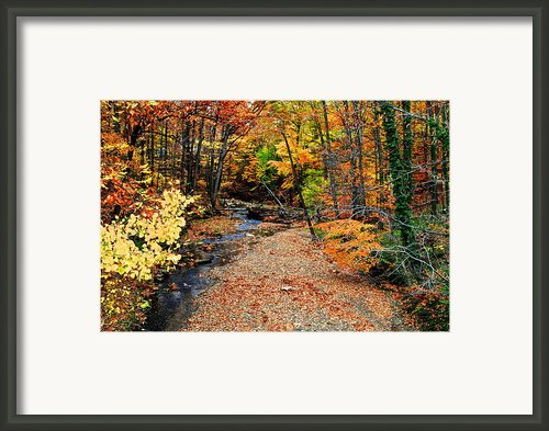 Spectrum Of Color Framed Print By Robert Harmon
