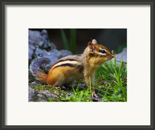 Speedy Framed Print By Abeautifulsky  Photography