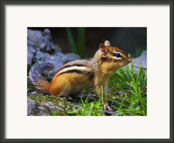 Speedy Framed Print By Bill Caldwell -        Abeautifulsky Photography