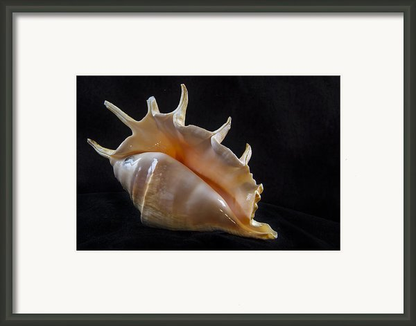 Spike Framed Print By Jean Noren