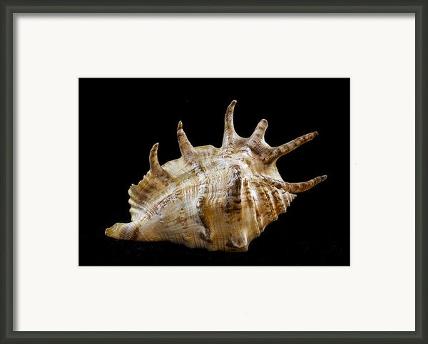 Spikes Back Side Framed Print By Jean Noren