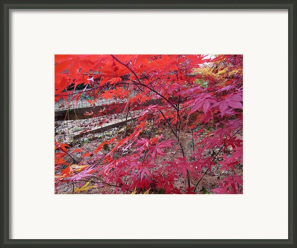 Splendid Fall Framed Print By Valia Bradshaw