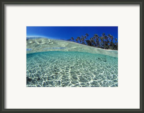 Split Level Palms Framed Print By Sean Davey