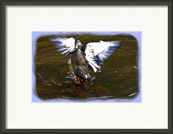 Spread Your Wings Framed Print By Susan Leggett