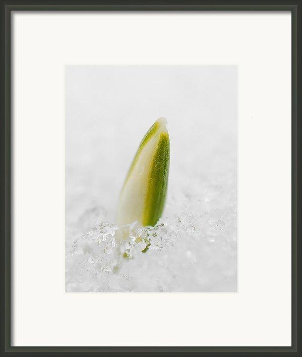 Spring 2 Framed Print By Antonio Castillo