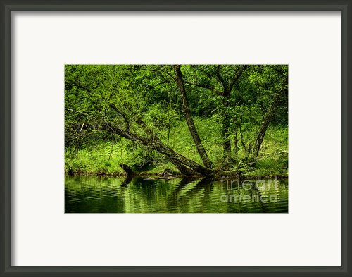 Spring Along West Fork River Framed Print By Thomas R Fletcher