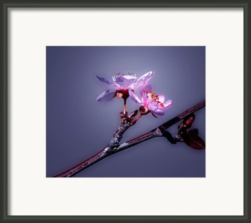 Spring Delight Framed Print By Camille Lopez