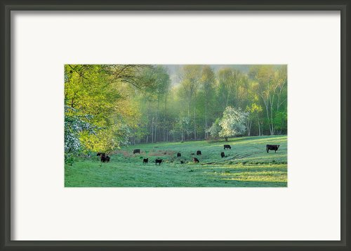 Spring Grazing Framed Print By Bill  Wakeley