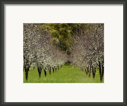 Spring Has Sprung Framed Print By Bill Gallagher