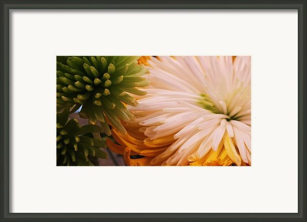 Spring Has Sprung Ii Framed Print By Anna Villarreal Garbis