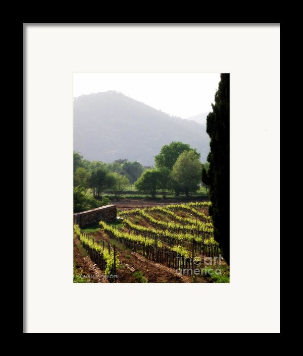 Spring Vines In Provence Framed Print By Lainie Wrightson