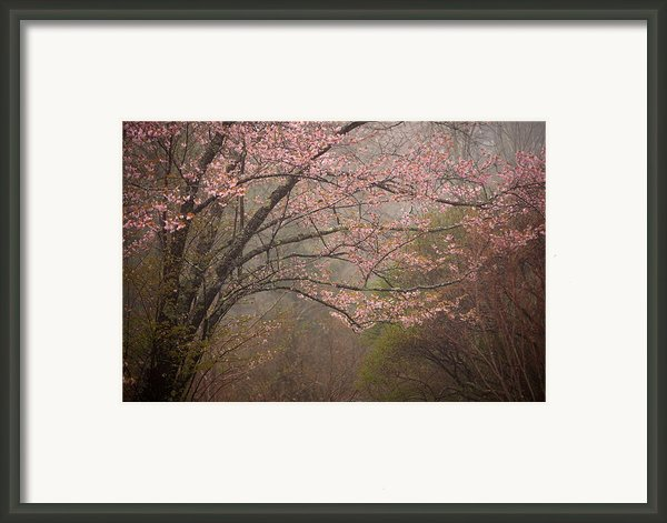 Spring Woods Framed Print By Patrick Downey