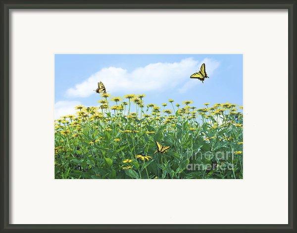 Springtime Framed Print By Diane Diederich