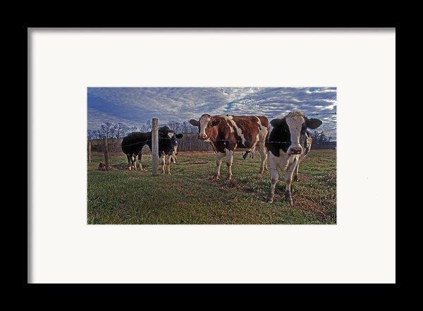 Stand Yer Ground Framed Print By Skip Willits