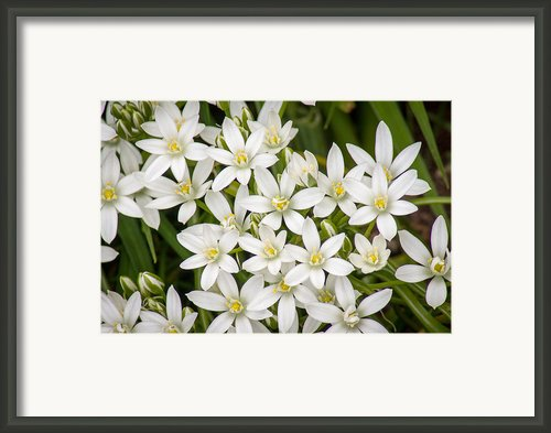 Star Of Bethlehem Framed Print By Bill Pevlor