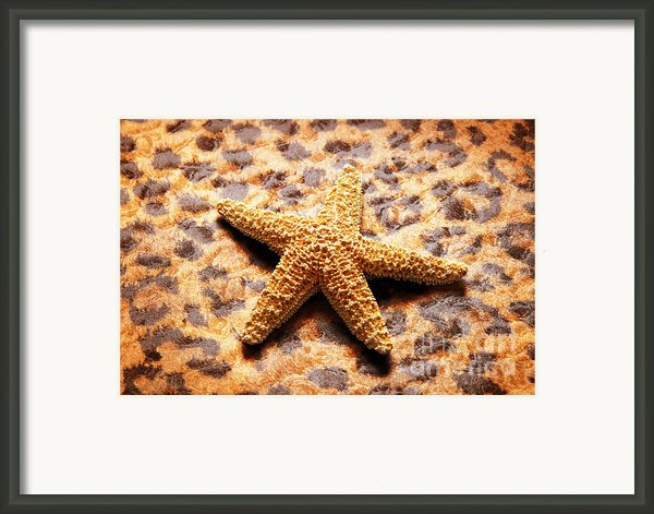 Starfish Enterprise Framed Print By Andee Photography