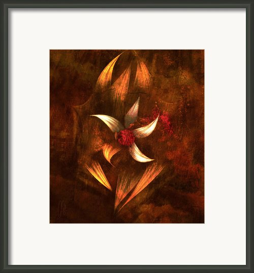 Stargazer Framed Print By Paul St George