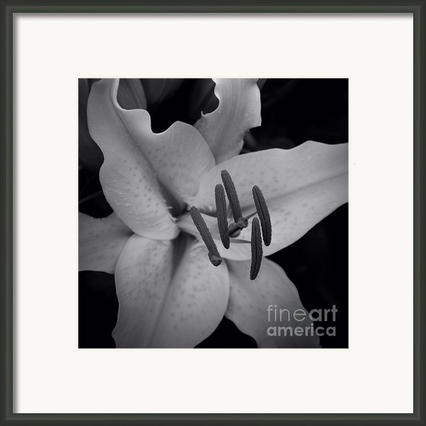 Stargazer Framed Print By Sharon Mau