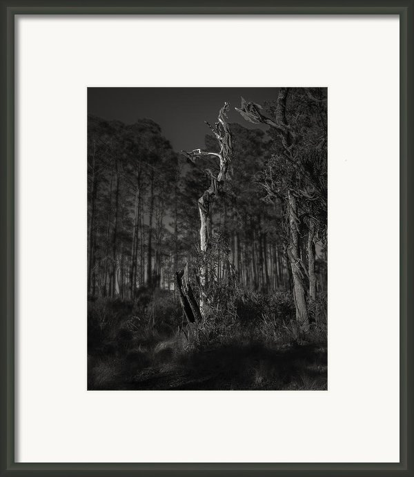 Still Standing Framed Print By Mario Celzner