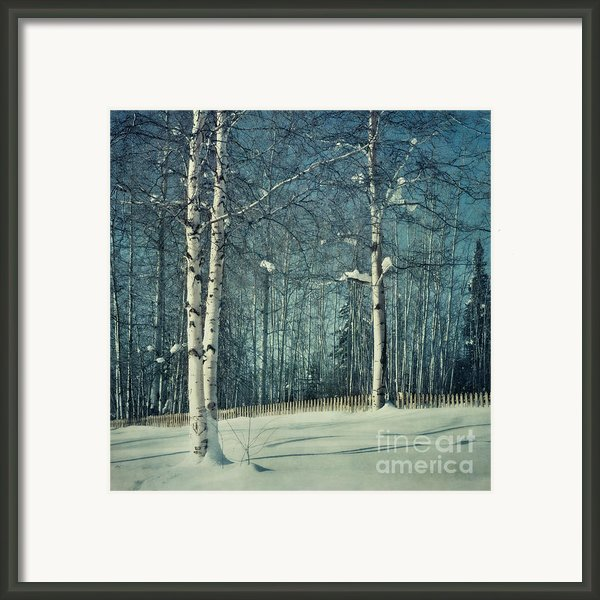Still Winter Framed Print By Priska Wettstein