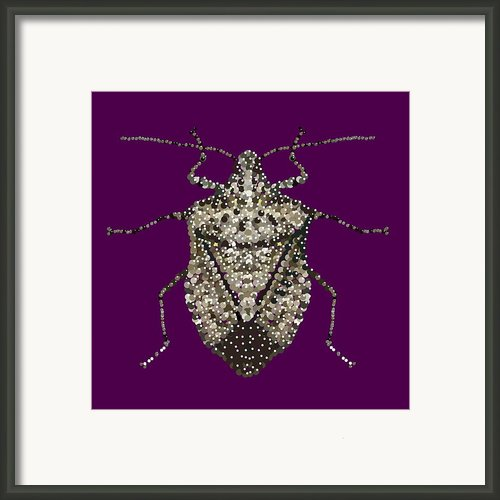 Stink Bug Bedazzled Framed Print By R  Allen Swezey