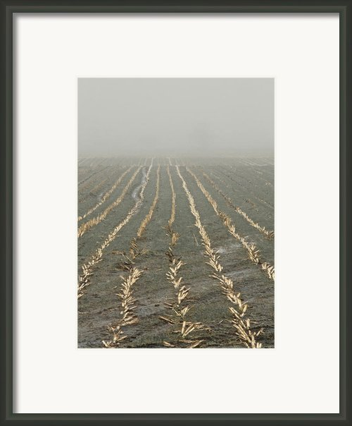 Stitches Framed Print By Odd Jeppesen